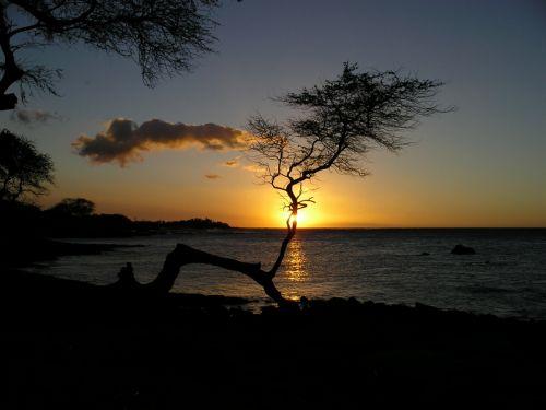 Tree - Launie